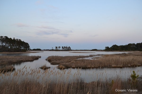 evening-assateague-island