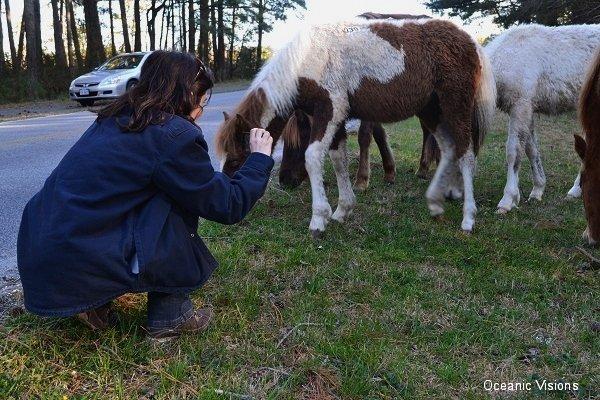 pony-picture