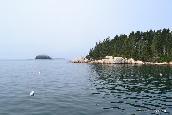misty-spruce-isles
