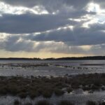 Sun-Streaming Salt Marsh, Assateague Island, Virginia.