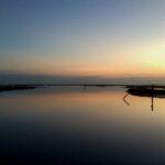 Oyster Ocean Dawn