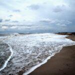 994. Barrier Island Beach-Grass